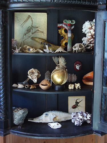 Zymoglyphic Museum Curiosity Cabinet